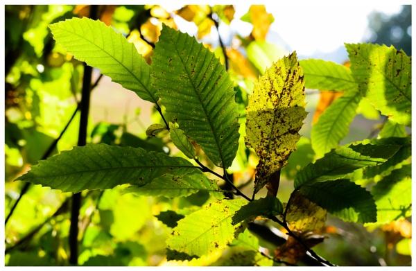 Autumn 6 by Nikonuser1