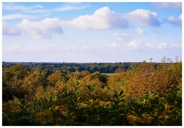 Autumn 7 by Nikonuser1