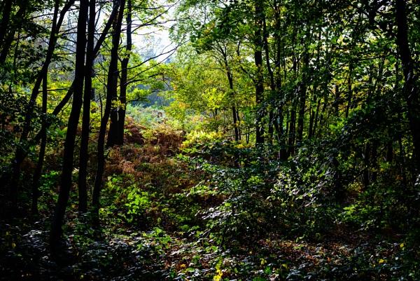 Autumn 8 by Nikonuser1