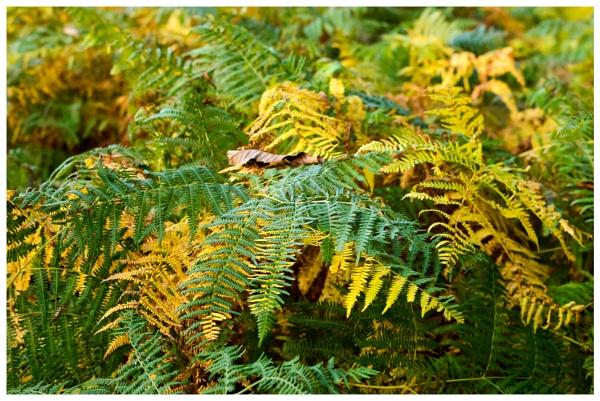 Autumn 9 by Nikonuser1