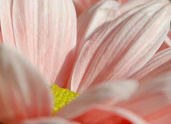 Pink by Alda