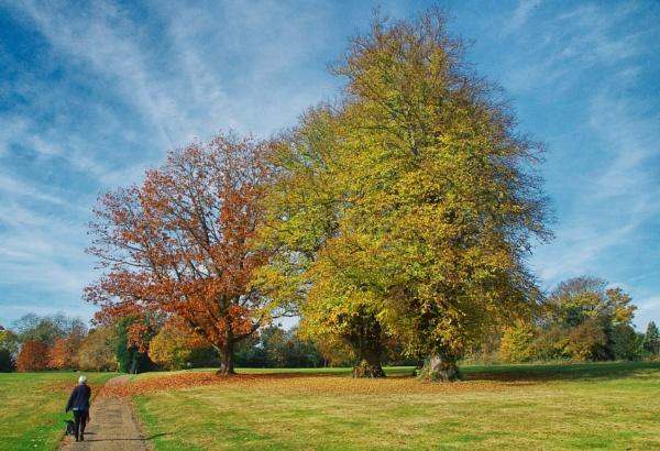 Autumn Walk by af1