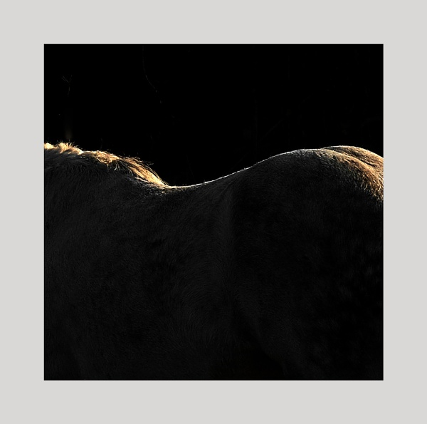 Topography of the Horse by whatriveristhis