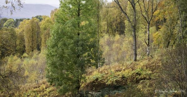 Autumn Glory... by Scottishlandscapes