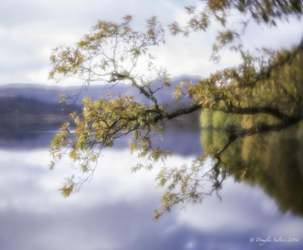 Velvet Soft... by Scottishlandscapes