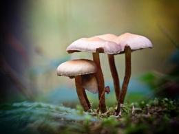 Mushroom stand