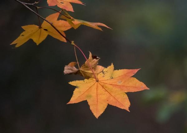 Autumn 8 : Oliveranum by taggart