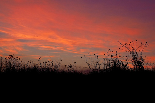 Early Evening High on the Salisbury Plain by julianora