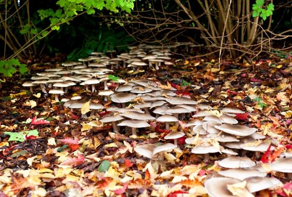 Marching Mushrooms by NevJB