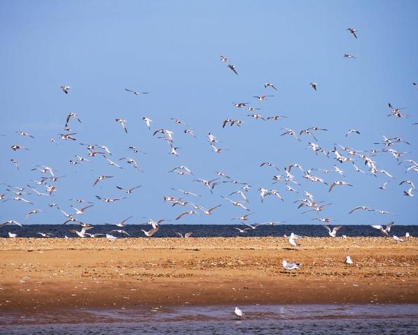 Seagulls by Fenfotos