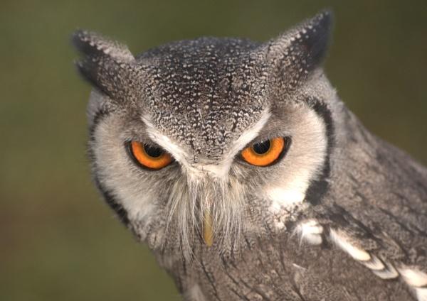 evil eyes by Owen05