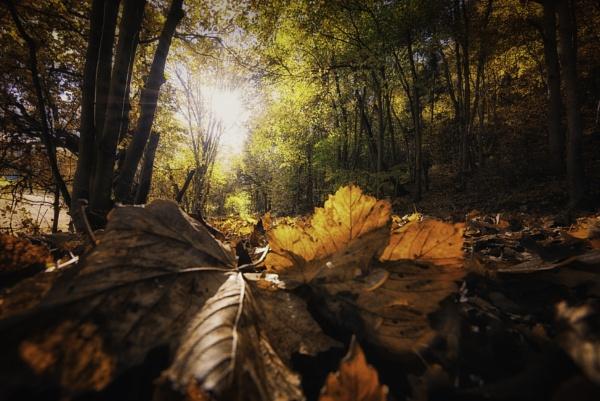 Guisborough woods autumn glow by Lee100