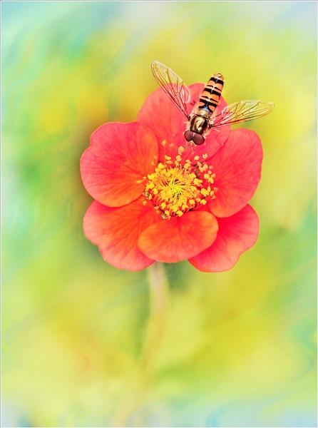 Marmalade & Geum. by bricurtis