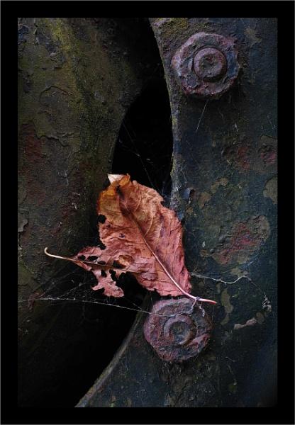 Autumn 11 by Rende