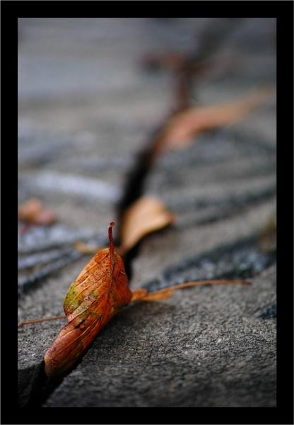 Autumn 12 by Rende