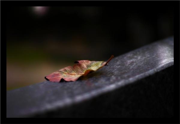 Autumn 13 by Rende