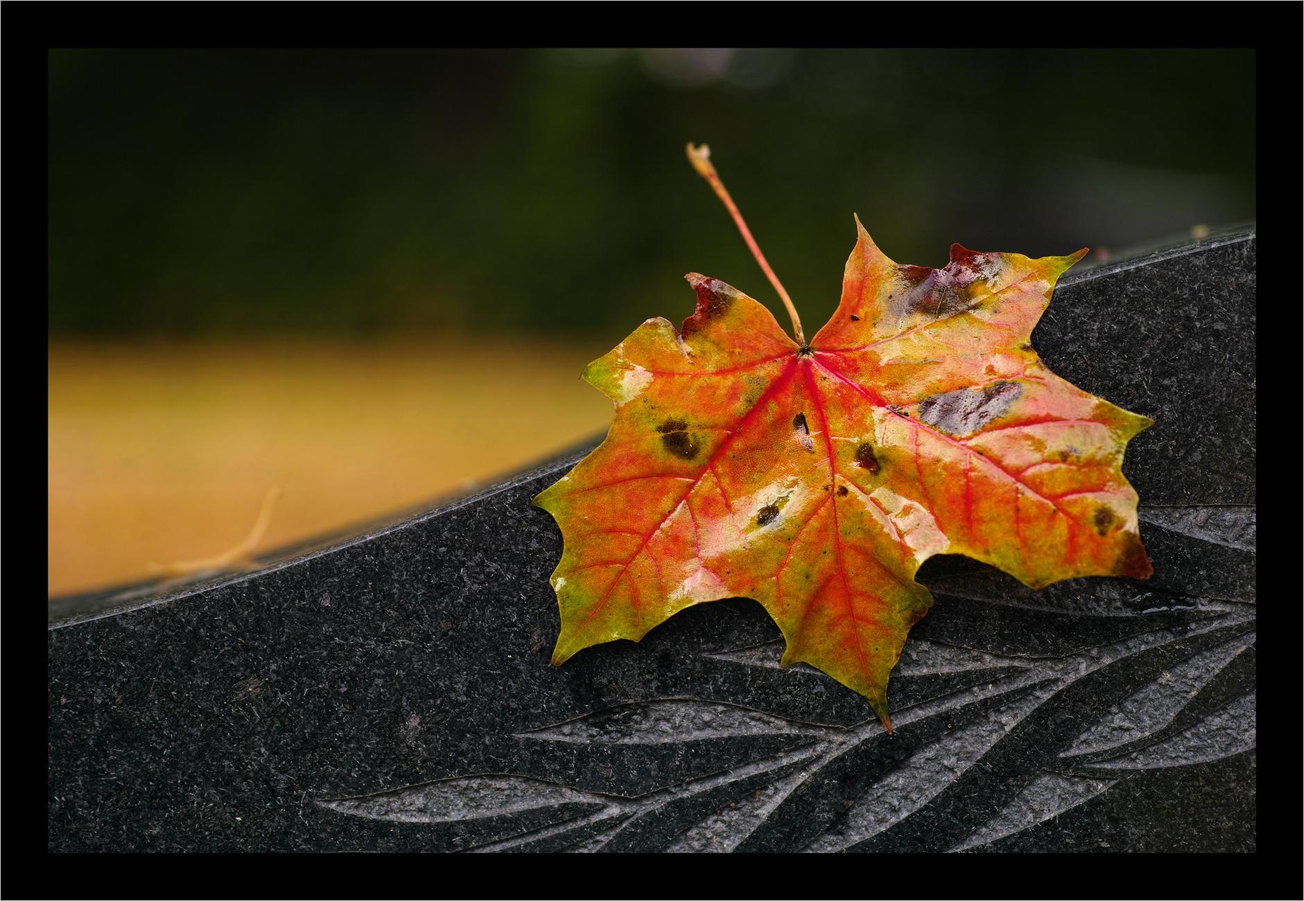 Autumn 15