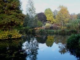 Foggy Bottom at Bressingham Gardens near Diss
