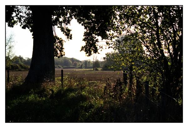Autumn light by alant2