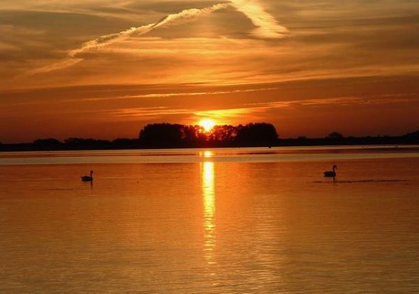 Swan-song by cheddar-caveman