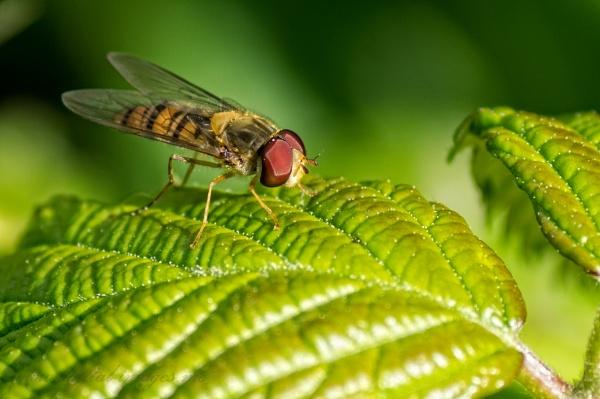 A Fly on a Leaf by Alan_Baseley