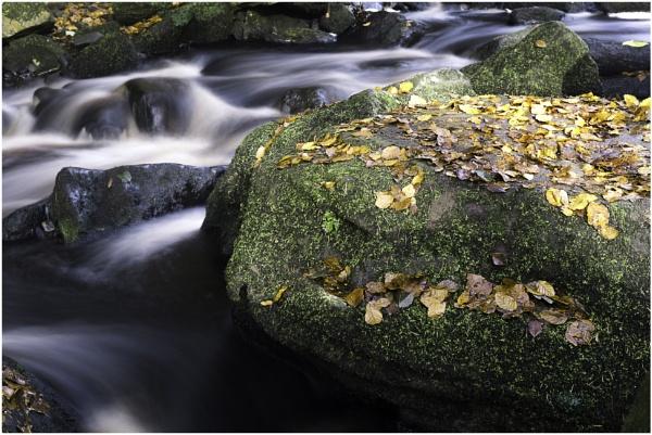 Autumn Brook by DJSpiderpig