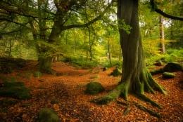 Woodland Hues