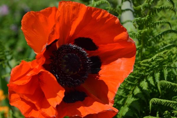 Rememberance Sunday by netta1234