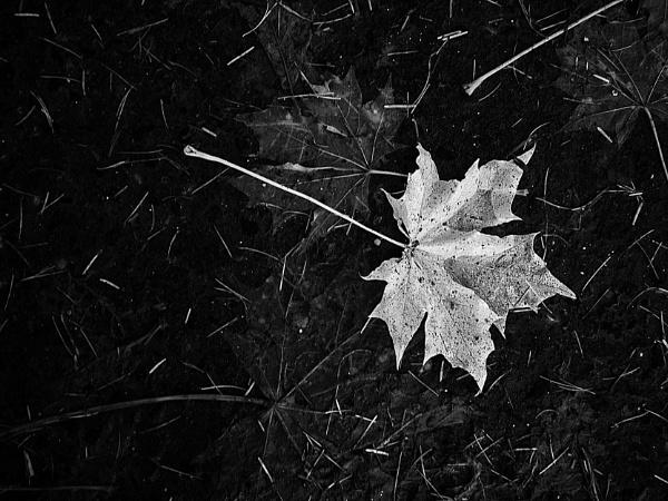 The Fallen by kaybee