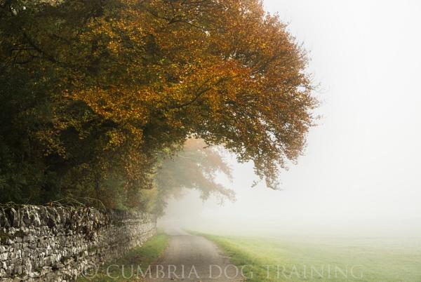 Foggy Autumn by CumbriaDogTraining