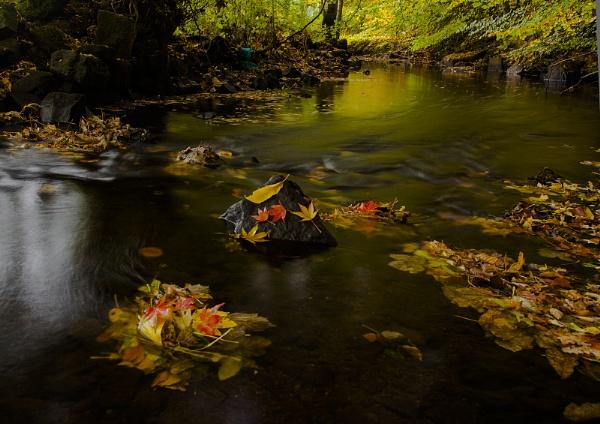 Autumn stream by Coracre