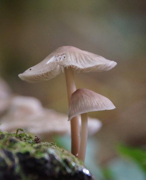 fungi by Rich1970