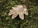 Fallen Leaf... by Scottishlandscapes