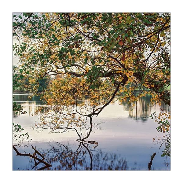 Loughrigg Tarn by gerainte1