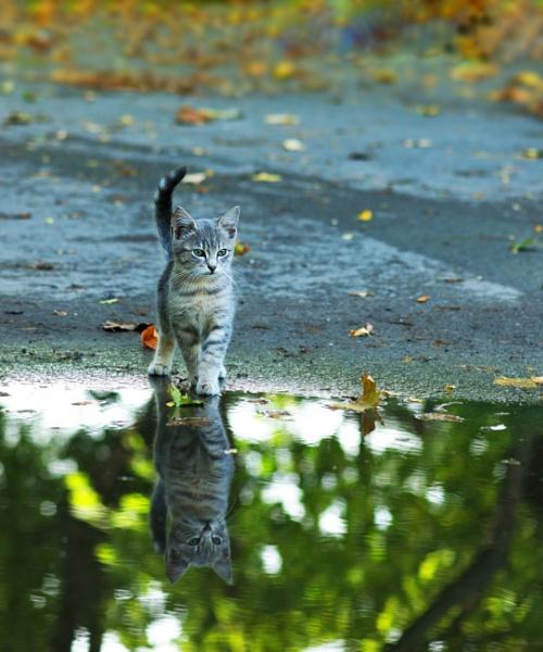 Reflection by tutye
