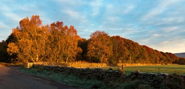 Early sun by BillRookery