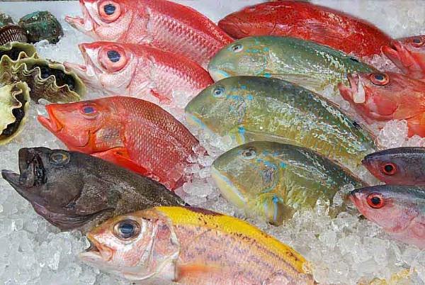 Fresh Frozen Seafood by RyukyuMike