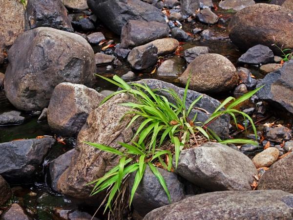 Grass on the Rocks by Wireworkzzz