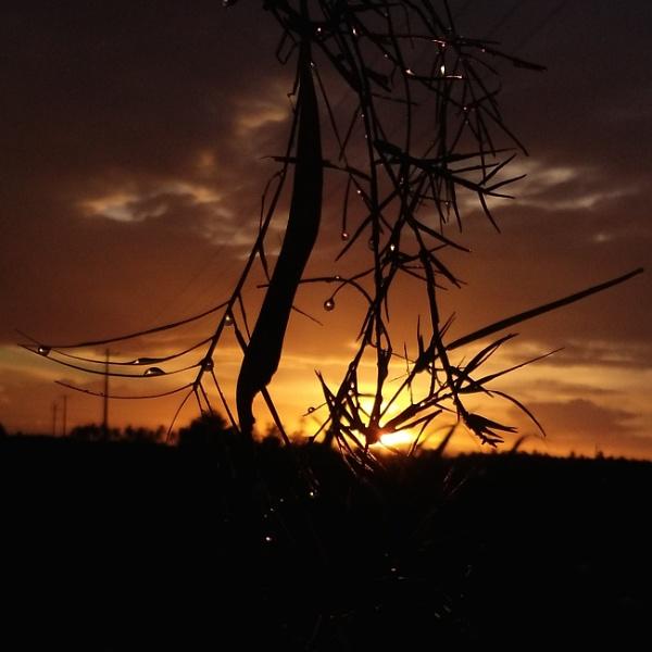 Sunset by mani_mechon