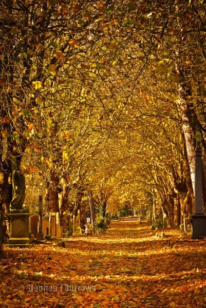 Autumns Palette by Stephen_B