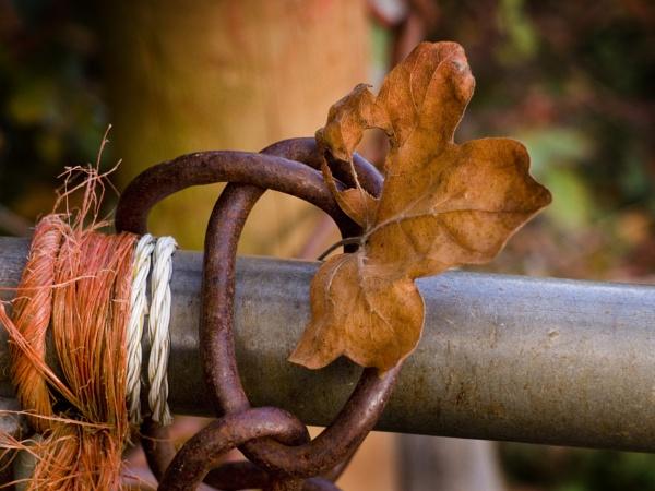 Bound Leaf by pledwith