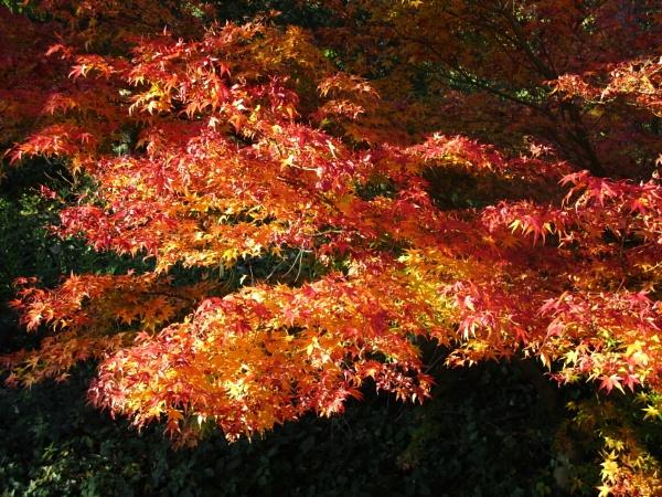 Autumn at Batsford by johnwnjr