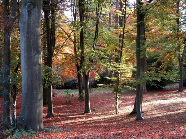 Batsford Arboretum by johnwnjr