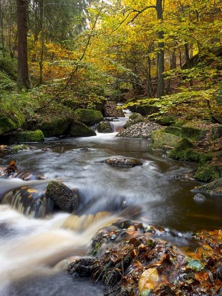 Autumn in Wyming Brook by Metalhead