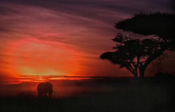 Elephant at Dawn by lonely_oryx