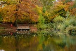 Lumsdale pond Derbyshire