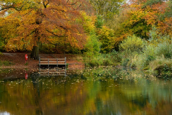 Lumsdale pond Derbyshire by RoyChilds