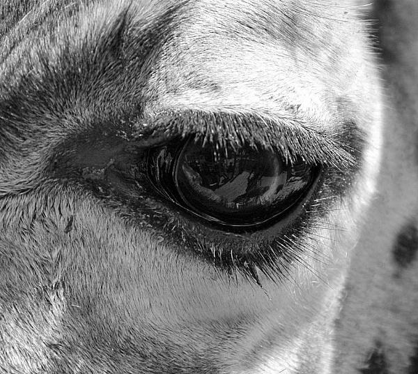Eyes Eyer. by peterthowe