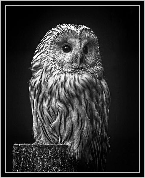 Night Owl by PhilT2