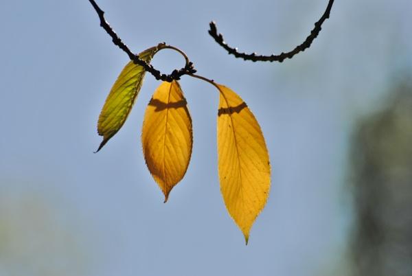 Leafy music... by Chinga
